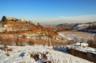 Un'azienda vinicola in Piemonte