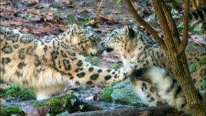 Parco Natura Viva: guida alla visita