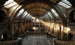 Museo di Storia Naturale di Londra, l'interno