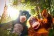 Disneyland Jungle Festival