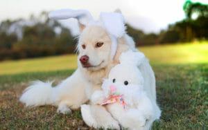 Buona Pasqua, cane