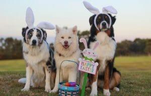 Buona Pasqua, gruppo cani