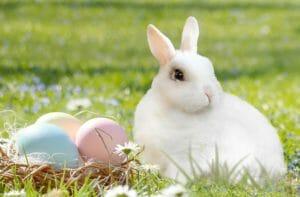Buona Pasqua, coniglio bianco