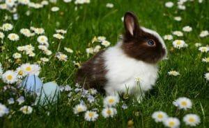 Buona Pasqua, coniglio pezzato